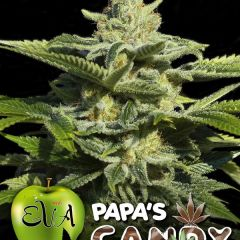 papas-_candy_eva_seeds.jpg