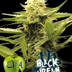 black_dream_eva_seeds.jpg