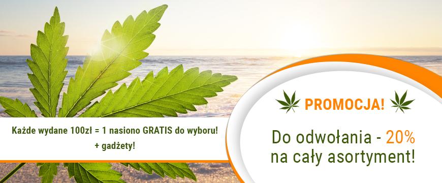 TaniePestki.pl Feminizowane NASIONA MARIHUANY ! Szybka wysyłka, dużo gratisów, niskie ceny!
